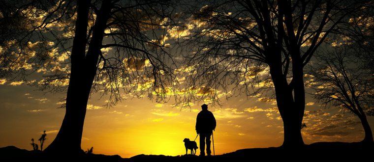 אימון כושר עם הכלב: הרבה יותר יעיל משחשבתם!